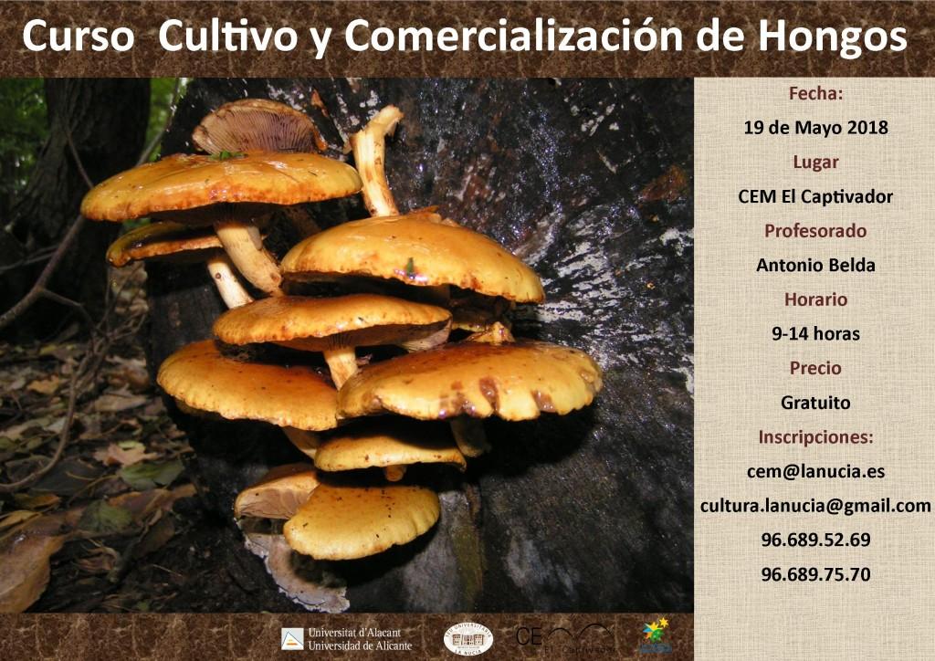 curso-cultivo-y-comercializacion-de-hongos